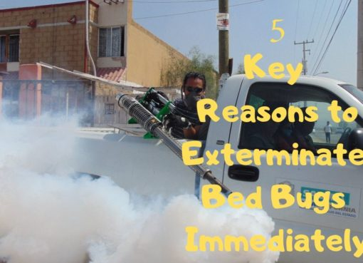 5 Key Reasons to Exterminate Bed Bugs Immediately